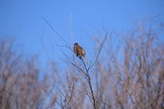 Enjoy this picture collection of creatures with wings. Cooper's Hawk, Black Capped Chickadee, Picture Collection, Trail, Scenery, Wildlife, Wings, Creatures, Bird