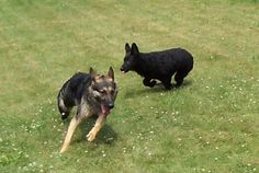 Thinking about taking your German Shepherd to a dog park?  Read this article first!    http://www.examiner.com/article/the-german-shepherd-dog-and-dog-parks