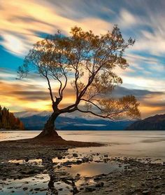 Wanaka, New Zealand. I heard, this tree is the most photographed tree through his color surge in Wanaka. Beautiful World, Beautiful Places, Beautiful Sky, Beautiful Scenery, Landscape Photography, Nature Photography, Photography Tips, Photography Courses, Professional Photography