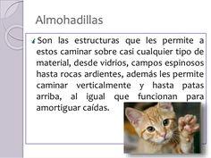 Resultat d'imatges de almohadillas de las patas de los gatos