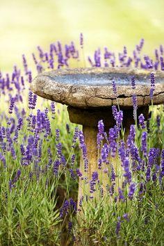 lavender surrounding a rustic birdbath
