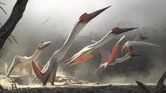 Pterosaurs Were Monsters of the Mesozoic Skies - Scientific American illus Chase Stone Dinosaur History, Dinosaur Art, Dinosaur Fossils, Dinosaur Time, Dinosaur Sketch, Dinosaur Crafts, Chase Stone, History Of Earth, Terra Nova