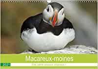 Macareux-moines Des petits oiseaux originaux! (Calendrier mural 2021 DIN A3 horizontal) Animals, Monthly Calender, Small Birds, Originals, Animales, Animaux, Animal, Animais
