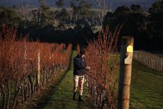 Climate Change Is Going To Destroy Australian Shiraz As We Know It