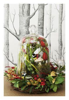 Under glass: woodland bell jar