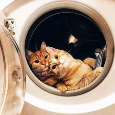 Very interesting post: 24 Cats and Kittens Pictures. Also dompiсt.сom lot of interesting things on Funny Cat.