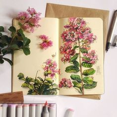 A Brazilian plant- a tree, I think it says? Artist would like to know the name. Art Journal Pages, Art Journals, Botanical Drawings, Botanical Art, Sketchbook Inspiration, Art Sketchbook, Watercolor Flowers, Watercolor Art, Merian