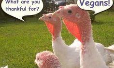 vegetarian cartoons - Buscar con Google
