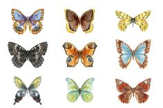 9 watercolor butterflies (EPS + PNG) by Lembrik's Artworks on @creativemarket