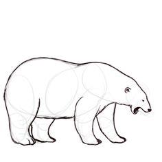 Outline Step 4 Tracez clairement votre ours polaire puis effacez les lignes d'esquisse.