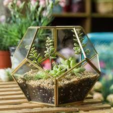 Resultado de imagen para flower terrarium