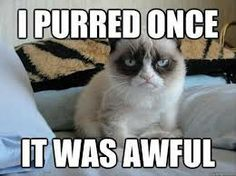 These are the Grumpy Cat memes I have been saving for no other reason than to laugh when I get grumpy. I mean, isn't that what Grumpy Cat is all about? Grumpy Cat Quotes, Funny Grumpy Cat Memes, Funny Cats, Funny Animals, Grumpy Cats, Funny Minion, Grumpy Cat Movie, Cat Jokes, Silly Cats