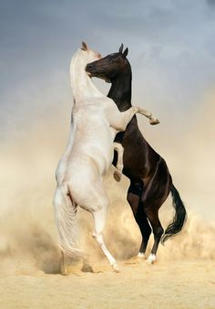 Horses ‬‏ by bernard | We Heart It