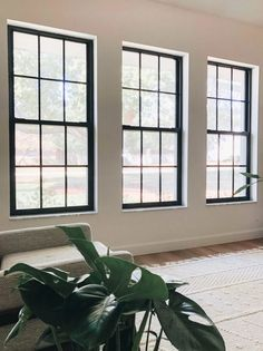 How to Paint Black Window Frames and Panes - Within the Grove Black Windows Exterior, Interior Windows, Interior And Exterior, Exterior Design, Black Vinyl Windows, Black Trim Interior, House Windows, Windows And Doors, Front Doors