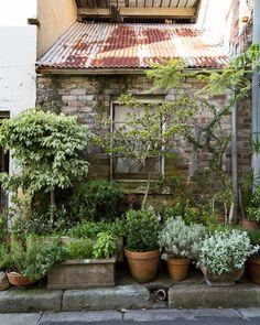 Urban Garden Design Cat Alley — The Design Files Magic Garden, Dream Garden, Big Garden, Summer Garden, Rustic Gardens, Outdoor Gardens, Pot Jardin, The Design Files, Design Blog