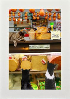 cats and cheese - Fancy Feast Cat Lover's Gourmet Grilled Cheese House Party #CatsSayCheese