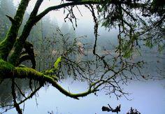 Myths and legends | Blackforest Tourism - Schwarzwald Tourismus GmbH