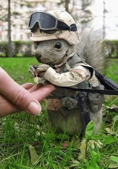 We've gone from gorilla warfare to squirrel warfare. What will they think of next