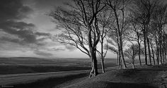 Chanctonbury Ring West Sussex South Downs