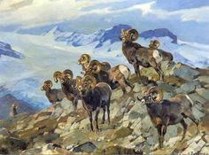 Things of beauty I like to see Wildlife Paintings, Wildlife Art, Nature Hunt, Big Horn Sheep, Hunting Art, Animal Sketches, Sports Art, Native American Art, Cool Art