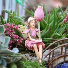 Fairy Gallery - Miniature Gardening