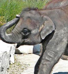 Baby Elephant~cl