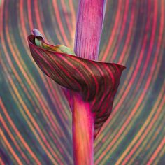 joanna kossak | leaves abstract II  I think this is a Croton leaf or Hawaian Plant leaf...?