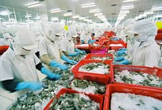 Vietnam was the largest shrimp exporter to the Republic of Korea in 2014 in terms of both volume and value