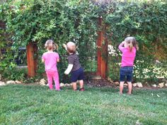 inexpensive fence line with built in privacy