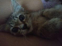 Cats, Animals, Gatos, Animales, Kitty Cats, Animaux, Cat, Animal, Animais