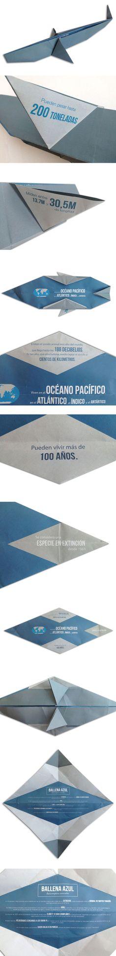 Proyecto Explica 2013. Ballena, Antia Casanovas y Leyre Gómez