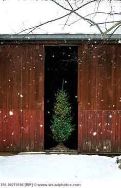 VINTAGE barn and christmas tree