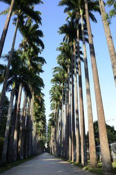 O Jardim Botânico do Rio de Janeiro é considerado um dos mais ricos e importantes do mundo.