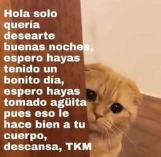 Reaction Pictures, Funny Pictures, Memes Amor, Memes Lindos, Current Mood Meme, Cute Love Memes, Love Phrases, Spanish Memes, Wholesome Memes