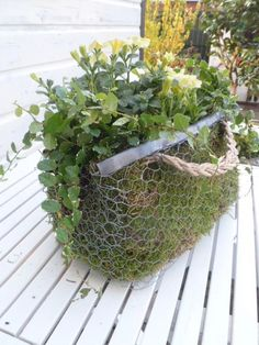 DIY outdoor moss flower pot.