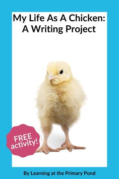 Do you teach your primary students about the chicken life cycle? I created a FREE downloadable activity you can use to teach them! Check it out on the blog. #teacherblog #teachertoolbox #writing #easterkidsactivities #studentactivities #freeteacherresources #firstgradeclassroom #secondgradeclassroom Easter Activities For Kids, Learning Activities, Writing Ideas, Creative Writing, Learn To Spell, Chicken Life, Teachers Toolbox, First Grade Classroom, Kindergarten Writing