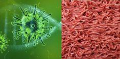 Bird Flu, Swine Flu, Health Facts, Going Vegan