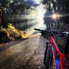 Mountain biking in a morning fog