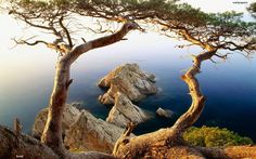 2 #trees and the #sea. from the wonderful blog of @I Am on  www.stumbleupon.com