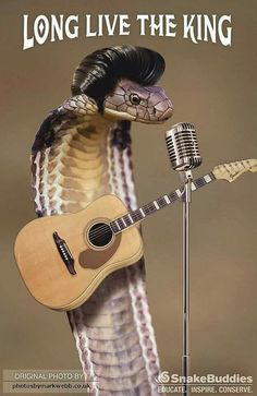Elvis is in the building My Spirit Animal, Embedded Image Permalink, My Best Friend, Snakes, Reptiles, Humor, Building, Humour, Buildings