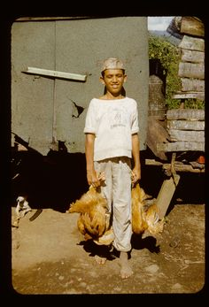 'Boy with two chickens.' Puerto Rico, between 1948 and 1951
