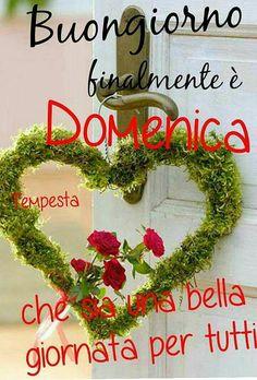 Buongiorno, buona domenica Happy Sunday, Good Morning, Christmas Wreaths, Holiday Decor, Night Flowers, Genere, 3d Paper, Mornings, Google
