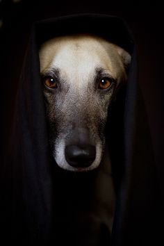 """This should be in """"art of photography"""".  Not just a beautiful dog, but an amazing photo!"""