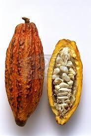 Cacao seed pod,