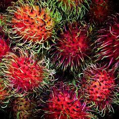 rambutan   #rambutan #exotic #fruit #fruits #fresh #tropical #beautiful #delicious #nomnom #food #foodporn #junglejims #international #keepitwild #red #yummy #art #natgeo #vsco #vscocam #vscolove #vscofood by natur3n3rd