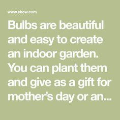 Bulbs are beautiful and easy to create an indoor garden. You can plant them and give as a gift for mother's day or any other special holiday or occasion.