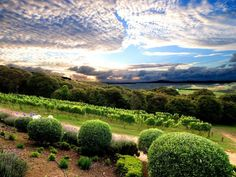 Mudbrick Vineyard and Restaurant on Waiheke Island, New Zealand - Possibly the best meal of my life New Zealand Wine, North Island New Zealand, Wine Images, Waiheke Island, Wine Country, French Country, Travel Pictures, Places To See, Vineyard