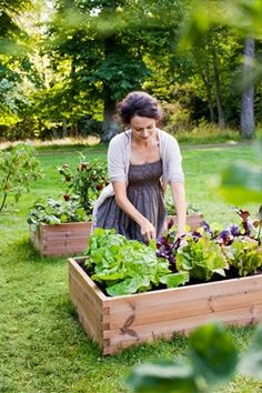 I need to build raised garden beds! Vertical Succulent Gardens, Succulents Garden, Container Gardening, Gardening Tips, Dream Garden, Home And Garden, Herb Garden, Raised Garden Beds, Raised Beds