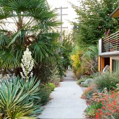 A reborn parking strip The hellstrip—that patch of ground between the sidewalk and the street—is often a neglected no-man's-land. However, the right plants can turn an eyesore into a treasured extension of your garden. Design Thinking, Garden Sprinklers, Desert Dream, Hardy Plants, Tall Plants, Garden Inspiration, Garden Ideas, Garden Tips, Garden Path