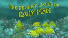 The secret lives of baby fish - Amy McDermott